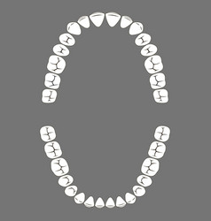 Chewing surface of human teeth upper and lower jaw vector