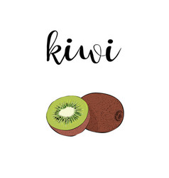Kiwi fruit color with calligraphic inscription vector