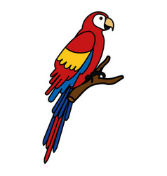 exotic parrot in branch tropical bird vector image