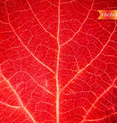 Red leaf texture vector