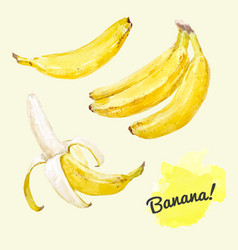 Watercolor bananas set vector