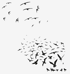 pack of seagulls and pack of swallows vector image