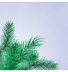pine branches frame vector image