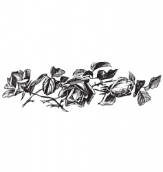antique roses engraving vector image vector image