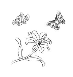 Lily and butterfly sketch vector image