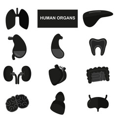 silhouettes of human organs on white background vector image vector image