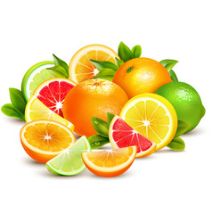 Citrus Fruits Collection Realistic Composition vector image