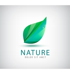 Green leaf nature organic icon vector