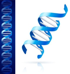 Blue dna vector image