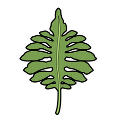Big green leaves of tropical monstera plant vector