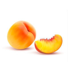 Peach And Slice vector image