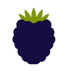 Blackberry flat icon vector