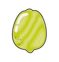 Lemon fruit food vector