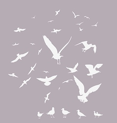 white pack of seagulls vector image