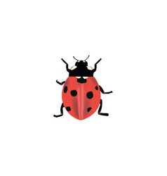 Realistic ladybug element of vector