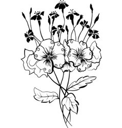 viola bouquet vector image
