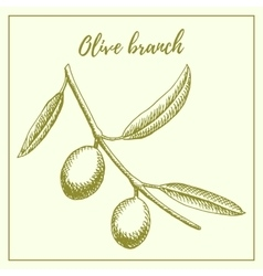 Olive branch hand drawn sketch vector image