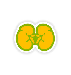 Paper sticker on white background human kidney vector