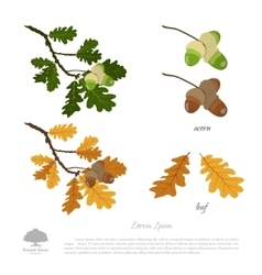 Oak branch in summer and autumn vector