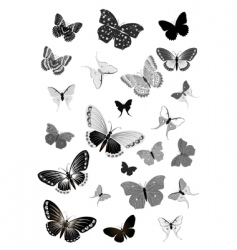 set of black butterflies vector image vector image