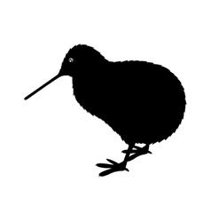 kiwi bird icon vector image