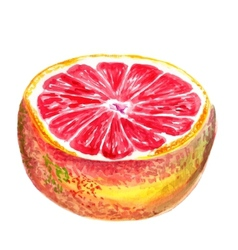 Half of grapefruit vector