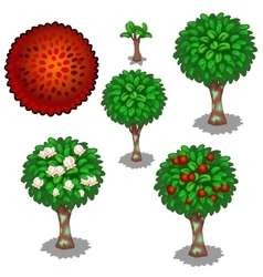 Planting and cultivation of red exotic rambutan vector