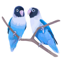 Pair of blue masked lovebirds vector