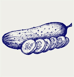 Cucumber and slices vector