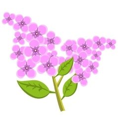 Branch of lilac flowers vector