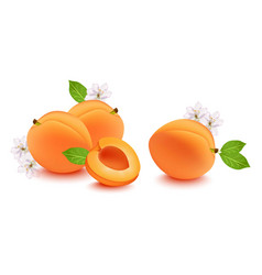 realistic peach and flower blossom vector image