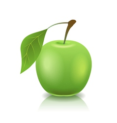 Green ripe apple vector