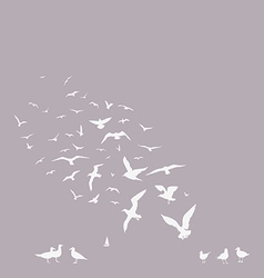 Pack of seagulls vector