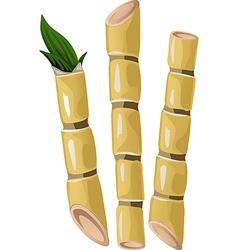 sugarcane vector image
