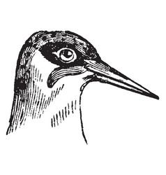 Head of a green woodpecker vintage vector