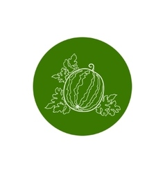 Icon watermelon in the contours vector