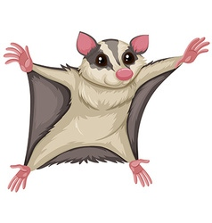 Flying squirrel with happy face vector