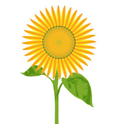 Giant sunflower vector