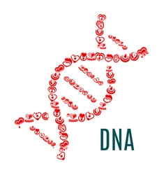 Dna symbol of hearts and blood vector