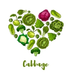 Cabbage vegetable heart shape poster vector image