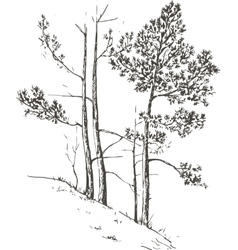 Pine trees at hill vector