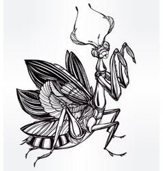 Beautiful hand drawn mantis beetle vector