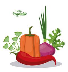 Fresh vegetable pepper onion lettuce menu vector