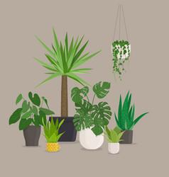 Set of green indoor house plants in pots vector