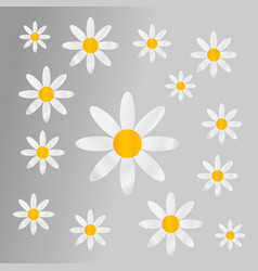 Chamomiles on grey background vector