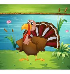 A turkey near the pond vector