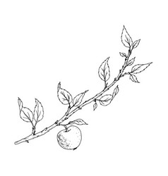 tree branch with leaves and apple vector image vector image