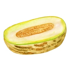 Half of melon vector