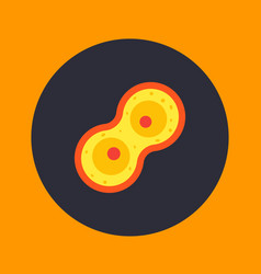 Cell division process mitosis icon vector
