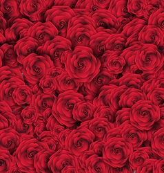 Valentines day background with roses vector